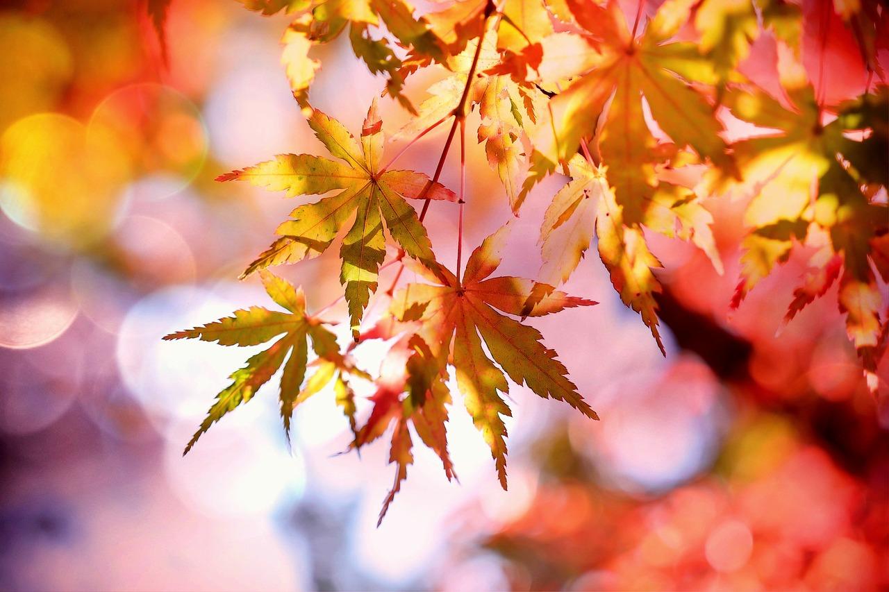 Hvad skal du lave med dine børn i efteråret?