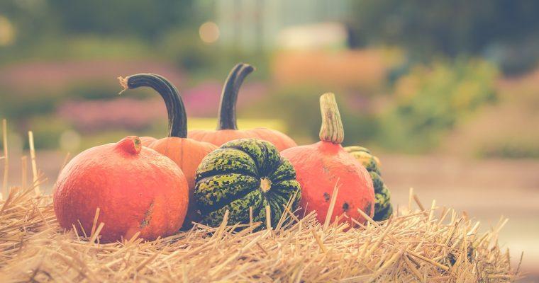 Gør brug af naturen i efteråret
